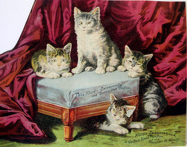 4282195456 7ff44d190a 1880s Cats Victorian Trade card L