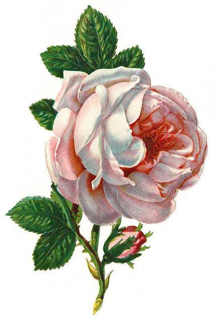 http://vintageimages.org/var/resizes/Flowers/Flowers11.jpg?m=1314016646