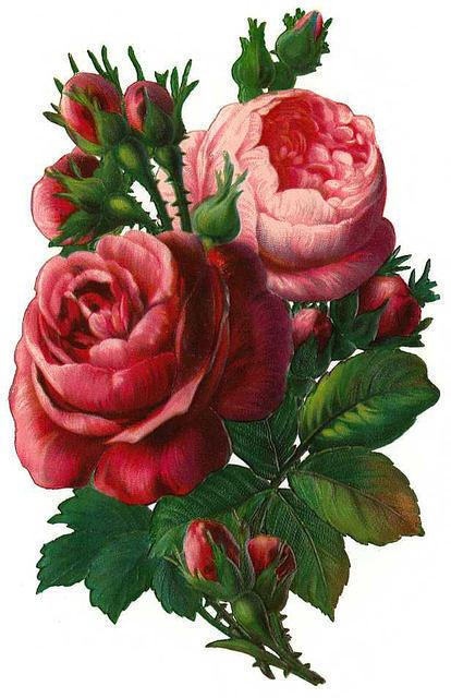 http://vintageimages.org/var/resizes/Flowers/Flowers159.jpg?m=1314016767