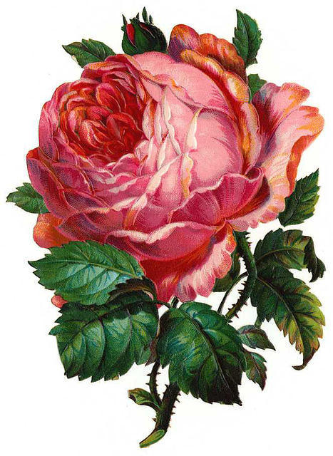 http://vintageimages.org/var/resizes/Flowers/Flowers217.jpg?m=1314016812