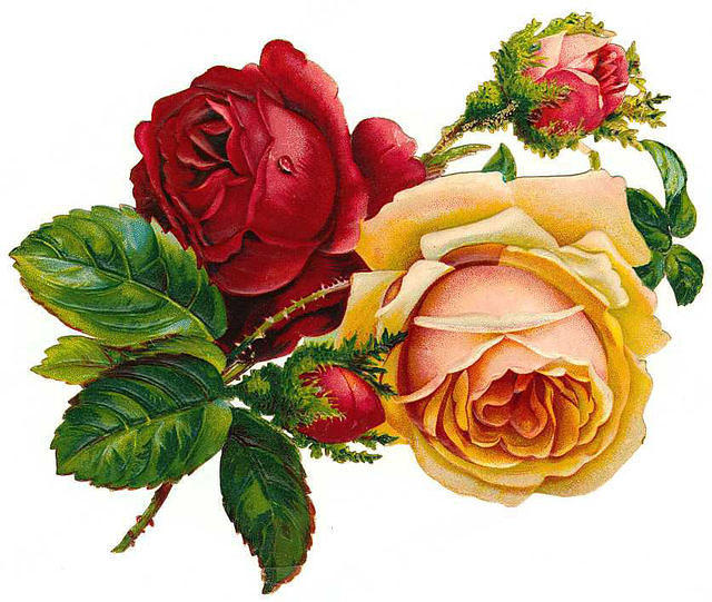 http://vintageimages.org/var/resizes/Flowers/Flowers220.jpg?m=1314016814