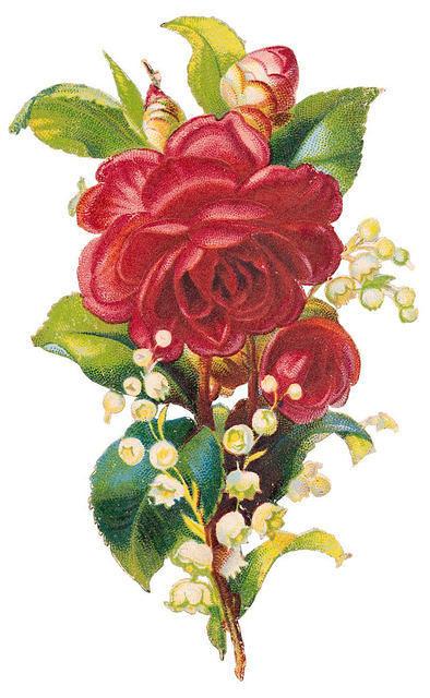 http://vintageimages.org/var/resizes/Flowers/Flowers258.jpg?m=1314016835