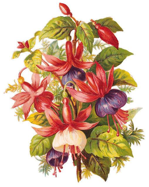 http://vintageimages.org/var/resizes/Flowers/Flowers259.jpg?m=1314016837