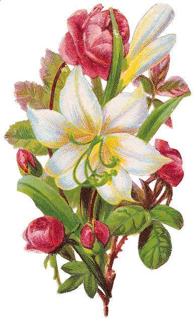 http://vintageimages.org/var/resizes/Flowers/Flowers299.jpg?m=1314016870
