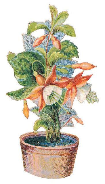 http://vintageimages.org/var/resizes/Flowers/Flowers307.jpg?m=1314016875