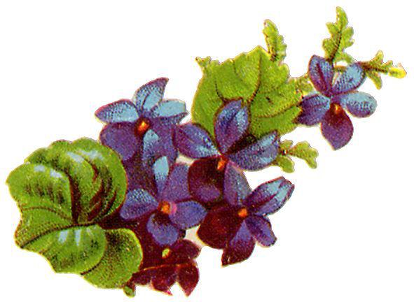 http://vintageimages.org/var/resizes/Flowers/Flowers333.jpg?m=1314016892