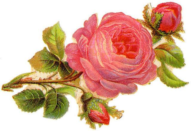 http://vintageimages.org/var/resizes/Flowers/Flowers334.jpg?m=1314016894