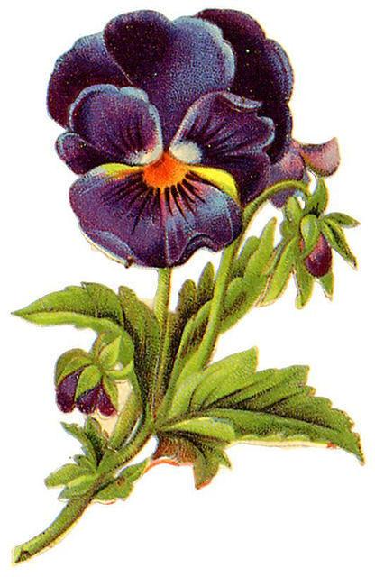 http://vintageimages.org/var/resizes/Flowers/Flowers366.jpg?m=1314016917