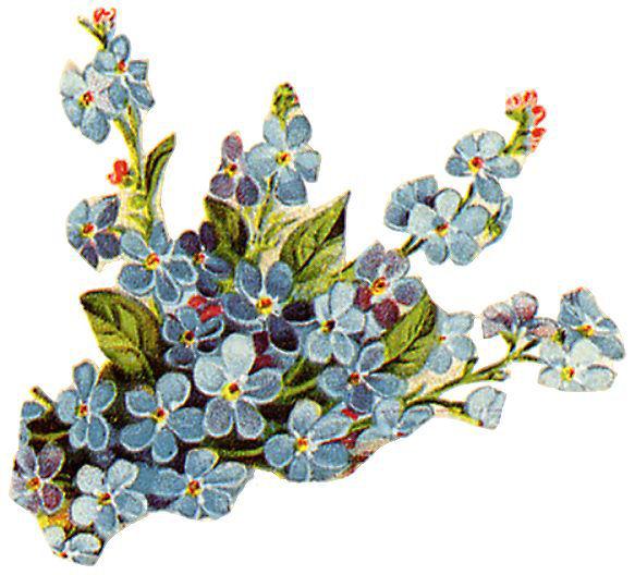 http://vintageimages.org/var/resizes/Flowers/Flowers371.jpg?m=1314016920