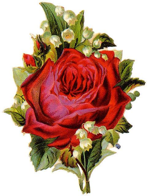 http://vintageimages.org/var/resizes/Flowers/Flowers372.jpg?m=1314016922