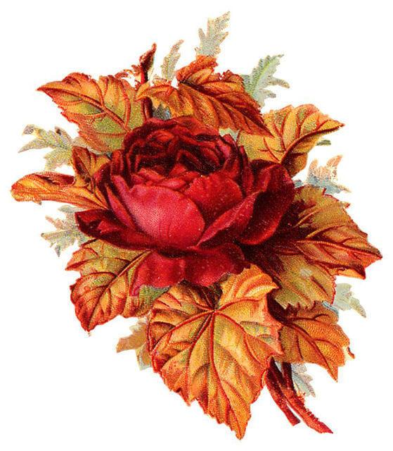 http://vintageimages.org/var/resizes/Flowers/Flowers385.jpg?m=1314016931