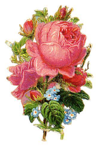 http://vintageimages.org/var/resizes/Flowers/Flowers409.jpg?m=1314016948