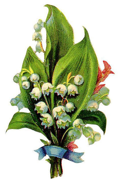 http://vintageimages.org/var/resizes/Flowers/Flowers410.jpg?m=1314016949