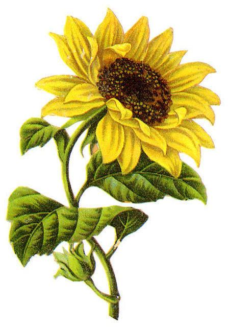 http://vintageimages.org/var/resizes/Flowers/Flowers444.jpg?m=1314016976