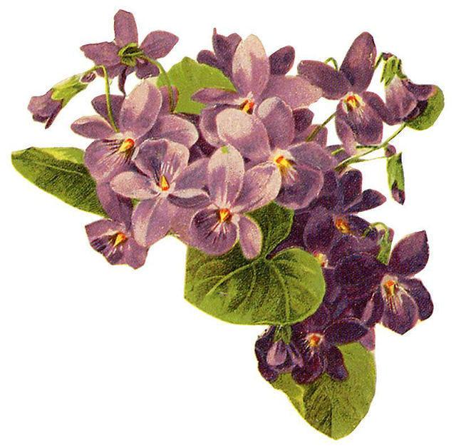 http://vintageimages.org/var/resizes/Flowers/Flowers450.jpg?m=1314016980