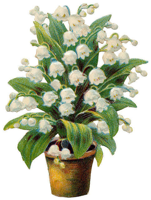 http://vintageimages.org/var/resizes/Flowers/Flowers460.jpg?m=1314016988