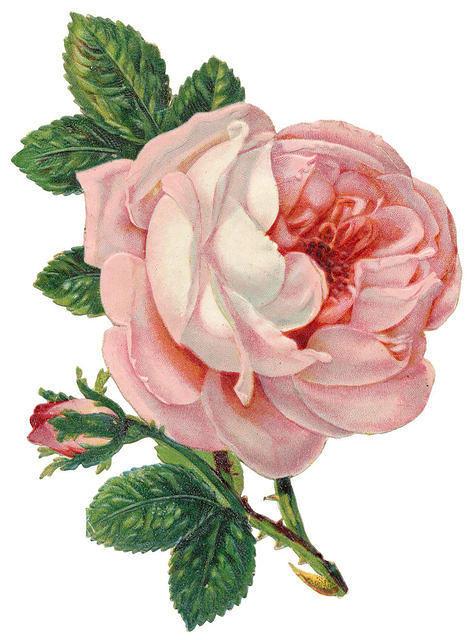 http://vintageimages.org/var/resizes/Flowers/Flowers461.jpg?m=1314016990