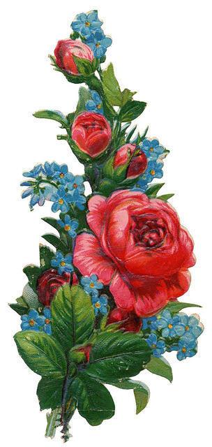 http://vintageimages.org/var/resizes/Flowers/Flowers463.jpg?m=1314016992