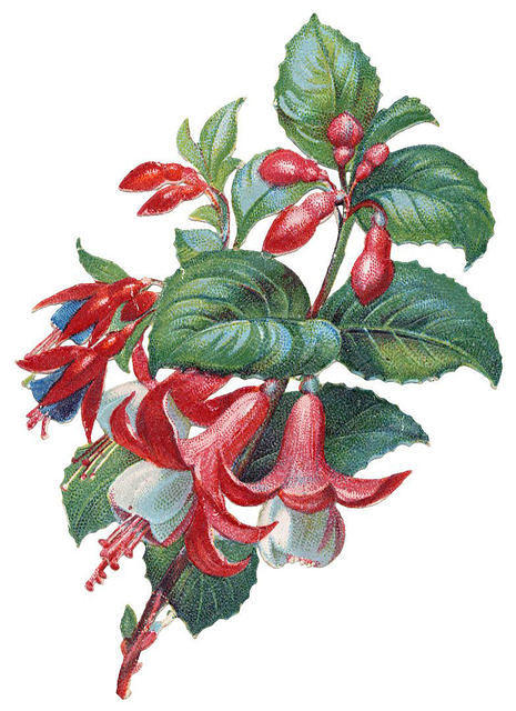 http://vintageimages.org/var/resizes/Flowers/Flowers466.jpg?m=1314016994