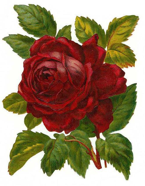 http://vintageimages.org/var/resizes/Flowers/Flowers52.jpg?m=1314016679