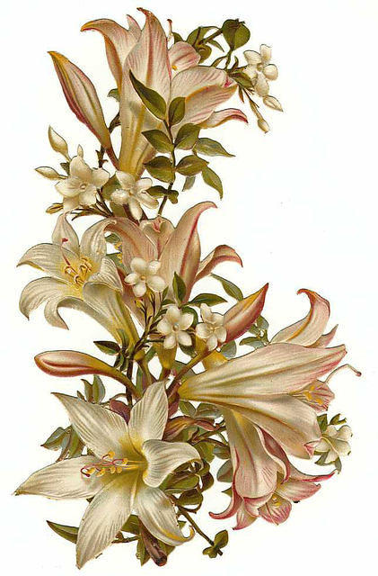 http://vintageimages.org/var/resizes/Flowers/Flowers569.jpg?m=1314017084