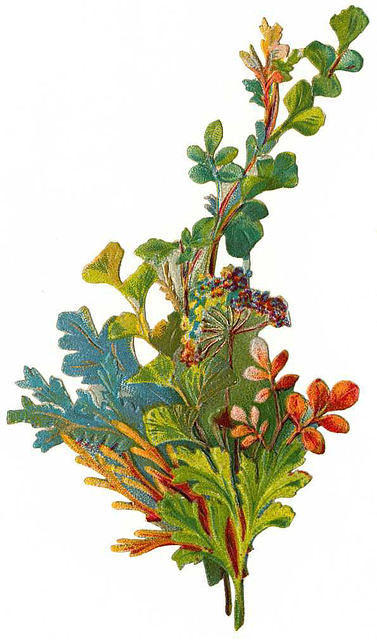 http://vintageimages.org/var/resizes/Flowers/Flowers632.jpg?m=1314017134